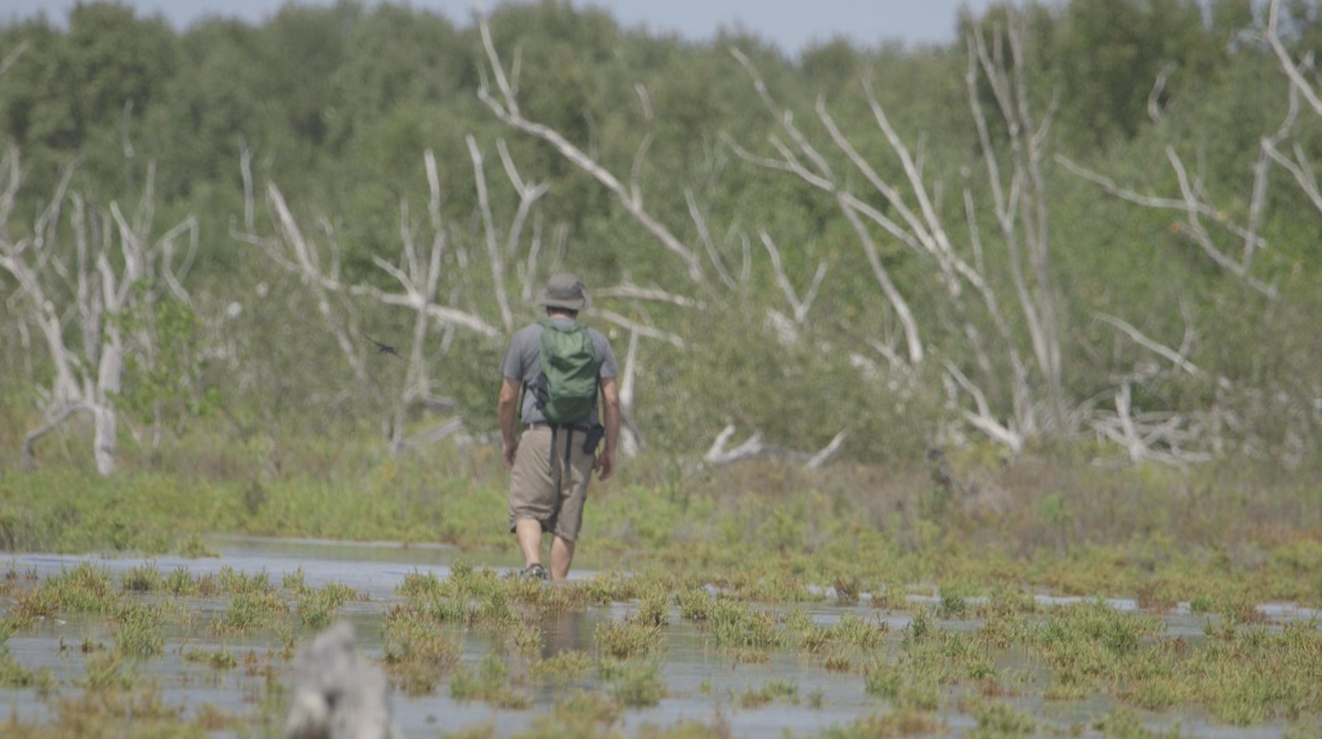 TheImageHunter_Everglades