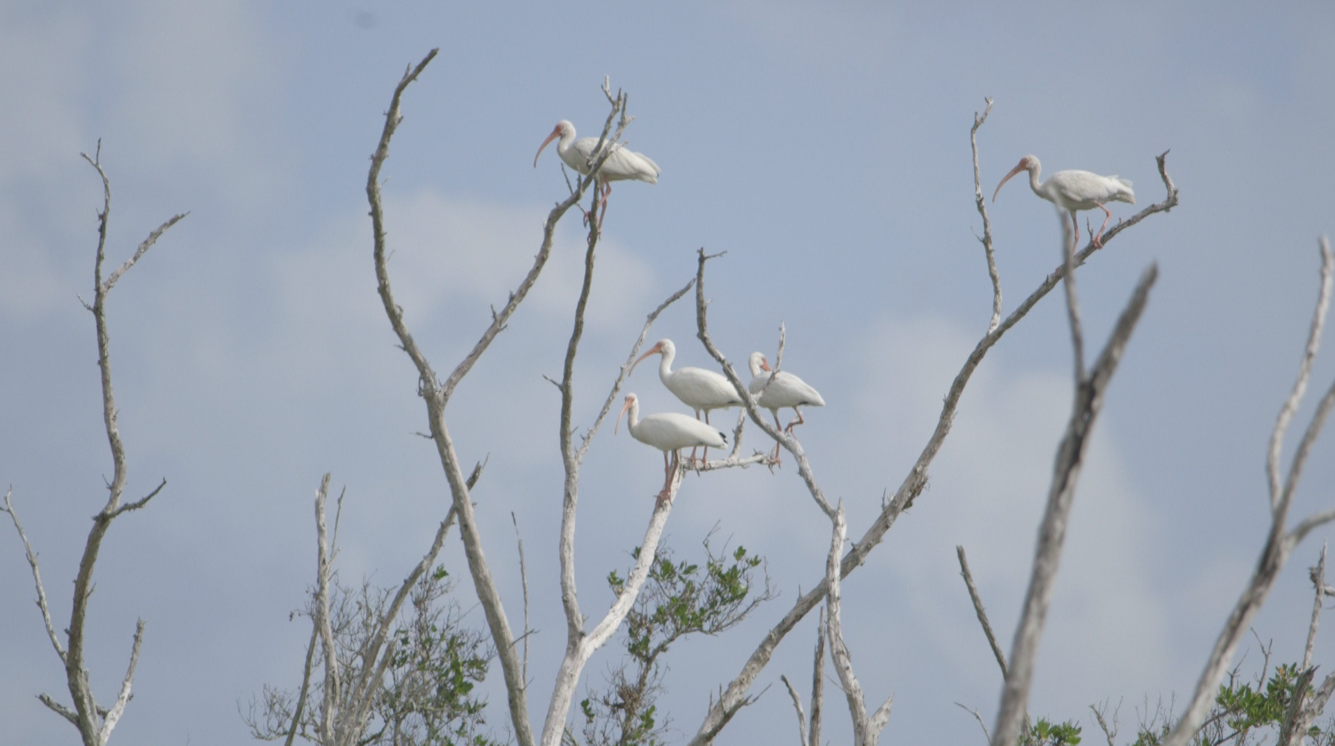 TheImageHunter_Everglades7