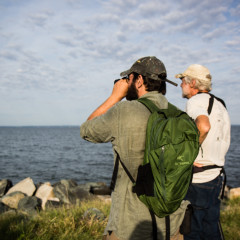Talbot County Birdwatchers Club