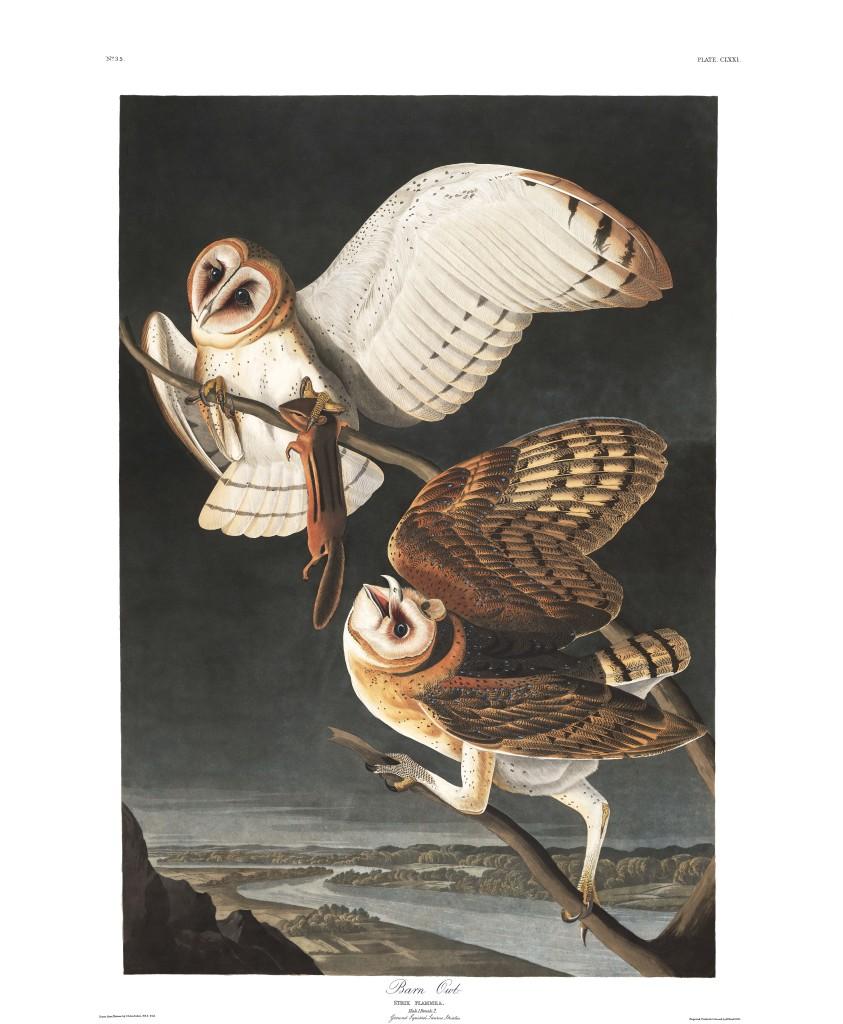 Plate-171-Barn-Owl-final