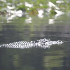 Okefenokee Swamp (Georgia)