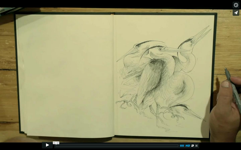 Video: Herons