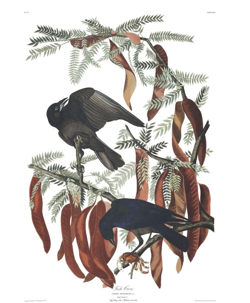 plate-146-fish-crow-final